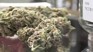 weed pot marijuana