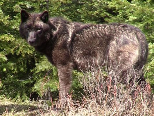Sighting confirmed of or 3 in southern oregon kobi tv for Oregon department of fish and wildlife jobs