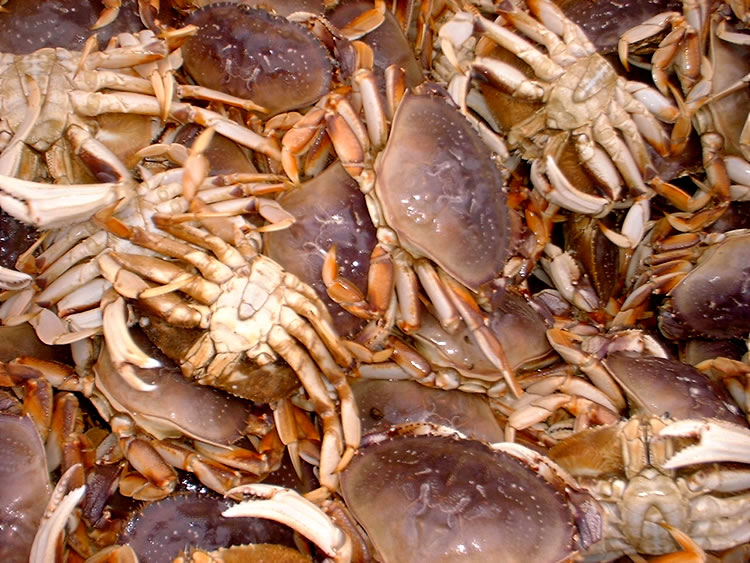Recreational crabbing is closed along southern oregon for Department of fish and wildlife washington