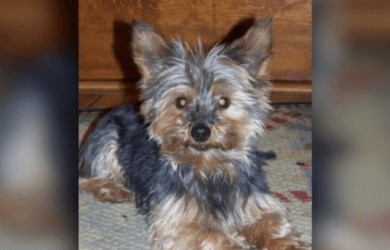 02.09 YORKIE SEARCH