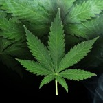 A lot of marijuana in Josephine County isn't going to patients, study says
