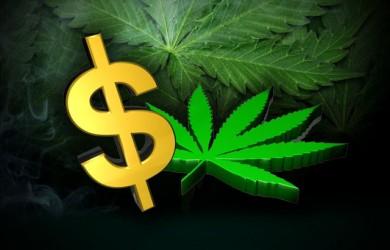 Marijuana Taxes