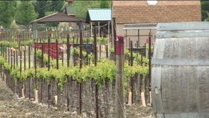 winery 2hawk
