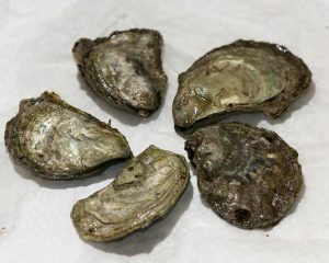 0502 Olympia Oyster