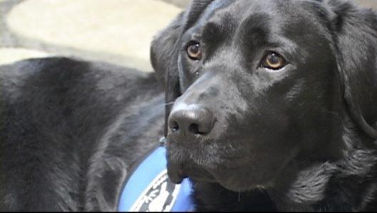 Hearing Dog Training Jobs