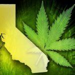Recreational marijuana will be on California's Nov. ballot