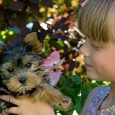 0830 girl holding dog