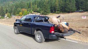 0919-douglas-county-elk