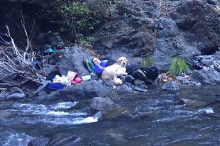 Dog Rescue Oregon Coast