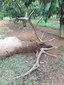 0928-elk-poaching-2