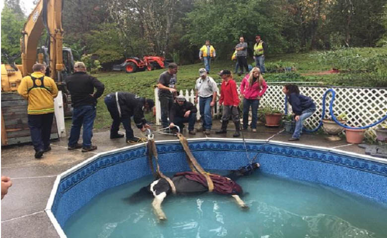 Horse Rescued From Swimming Pool In Josephine County Kobi Tv Nbc5 Koti Tv Nbc2