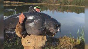 1201-catfish
