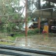Weather in Grants Pass brings down trees and power lines