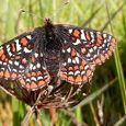 Butterfly program to help Oregon inmates, environment