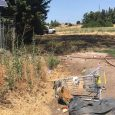 """""""Cooking fire"""" sparks grass fire in Central Point"""