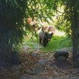 Bear cub sighting within Ashland city limits