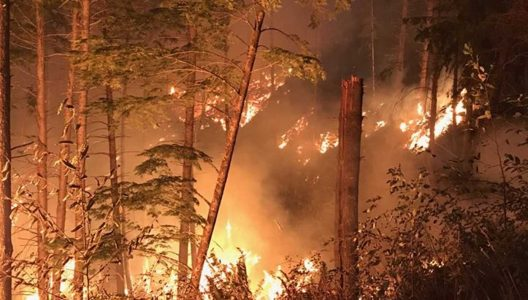 "Congressman Walden calls for ""proper"" forest management amid wildfires"