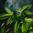 Congress considers marijuana legalization