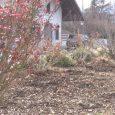 Southern Oregon experiencing more severe allergy season