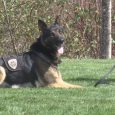 Medford Police Dept. training new K9