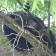 Education for 'bear problems' in Ashland