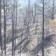 Klamathon Firefighters headed home as containment grows