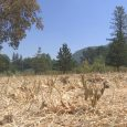 Fire emergency declaration prompts campfire ban at all state parks