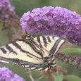 Pollinator tour showcases Ashland's 'Bee City' commitment
