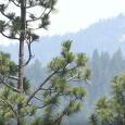 Klamathon Fire about a mile into Oregon