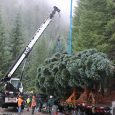 Oregon Christmas tree heads to Washington, D.C.