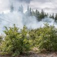 Downed power lines spark small fire near Kerby