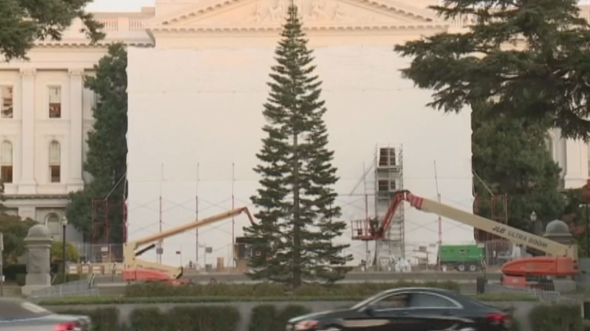 """California State Christmas Tree deemed """"ugly"""" by some ..."""