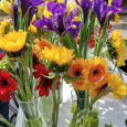 'Flower Cheer Fridays' come to an end at Pioneer Village
